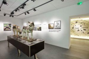 Musee-du-loup