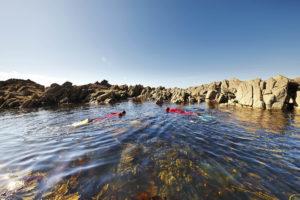snorkeling, balade palme Plougasnou, baie de morlaix, bretagne