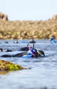 snorkeling balade à la palme à plougasnou