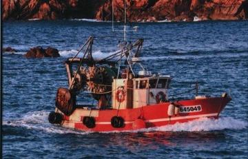 Vente directe de poisson au bateau
